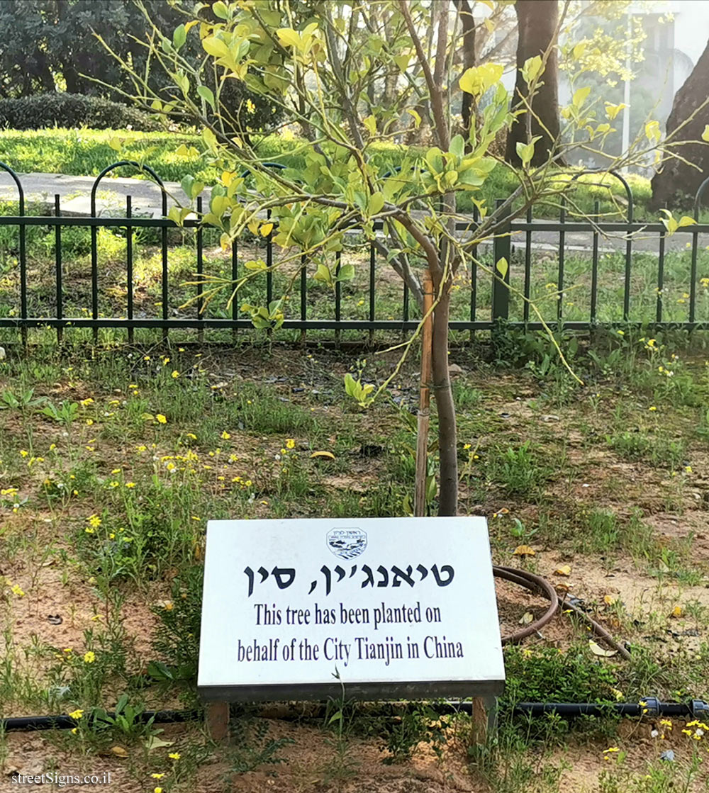 Rishon Lezion - trees planted for Sister cities - Tianjin, China