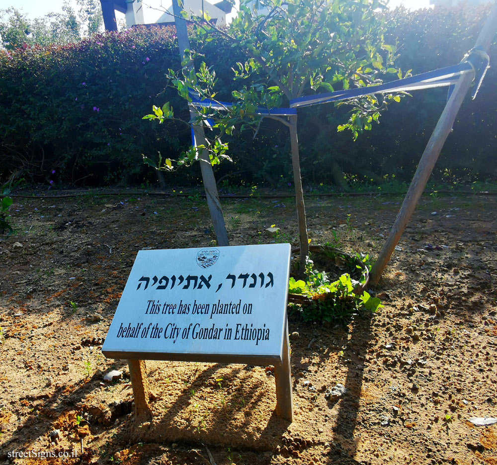 Rishon Lezion - trees planted for Sister cities - Gondar, Ethiopia