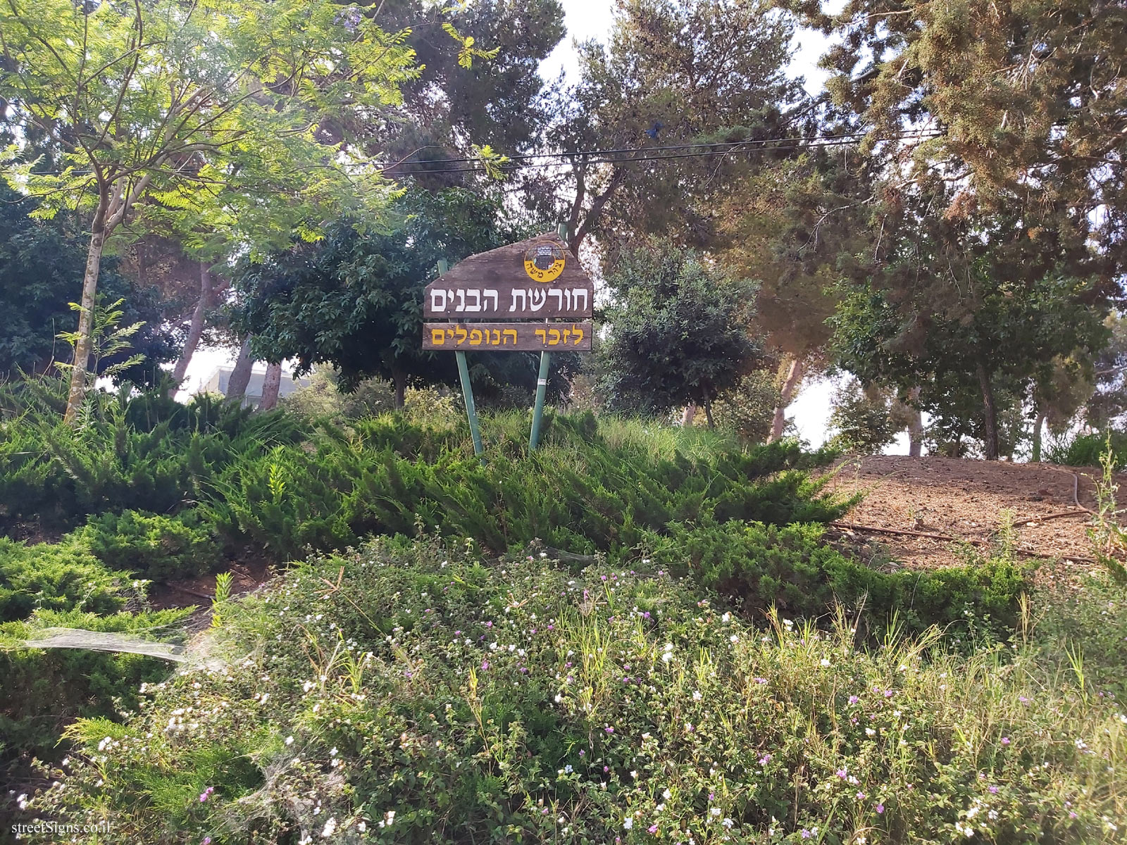 Tzur Moshe - The sons' grove